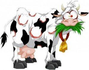 vache-300x235